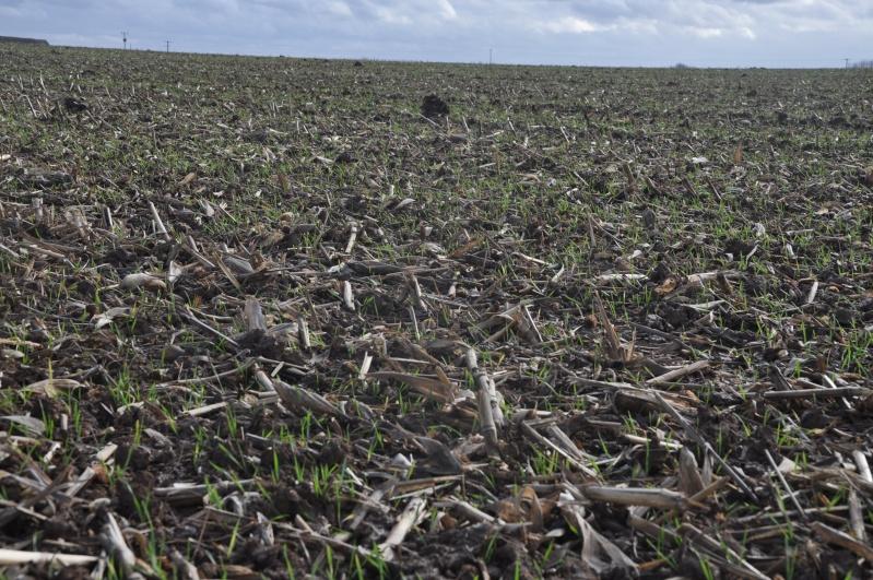 semis de blé 2013-2014 - Page 20 Ble_0112
