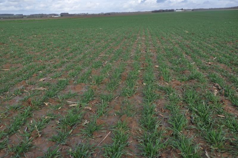 semis de blé 2013-2014 - Page 20 Ble_0212