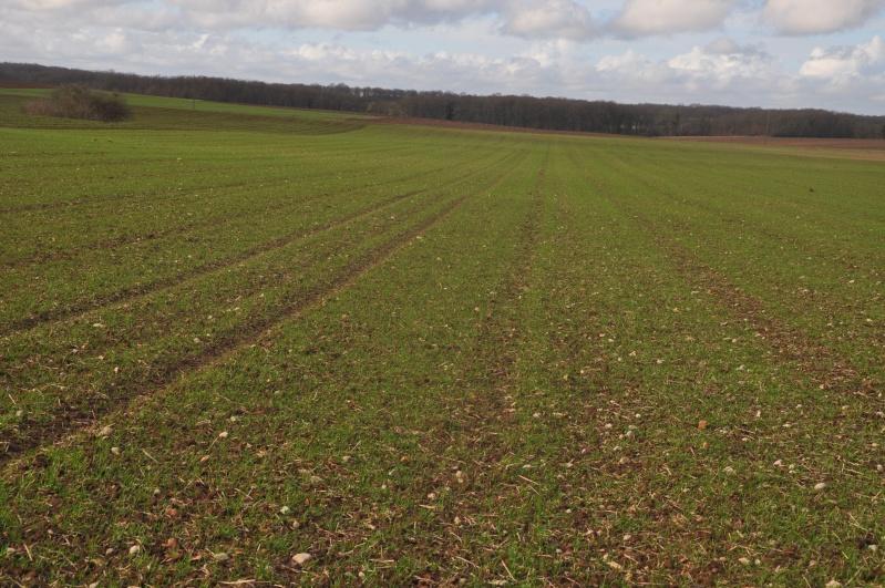 semis de blé 2013-2014 - Page 20 Ble_0214