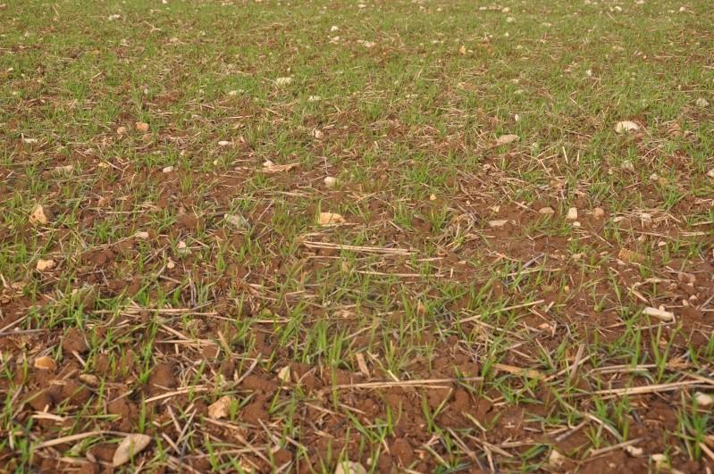 semis de blé 2013-2014 - Page 20 Ble_0215