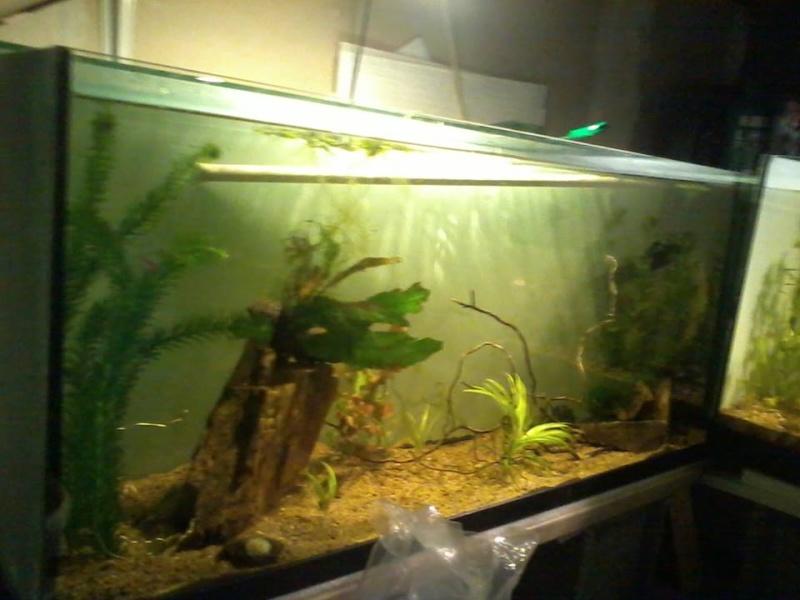 petite fishroom 10109810
