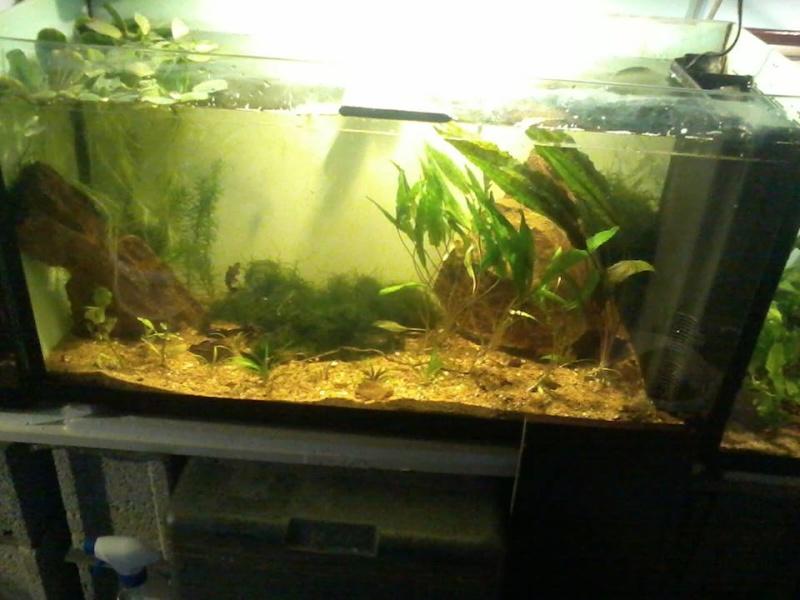 petite fishroom 15064111