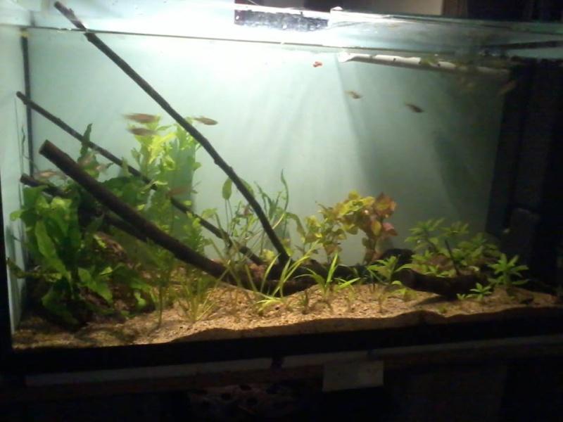 petite fishroom 16613510