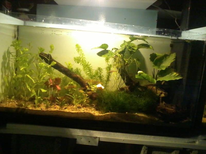 petite fishroom 19117610