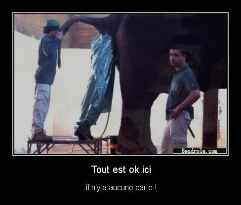 Photos comiques divers... Elepha10