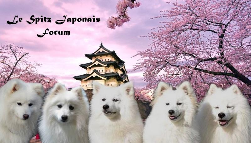 Le Spitz Japonais