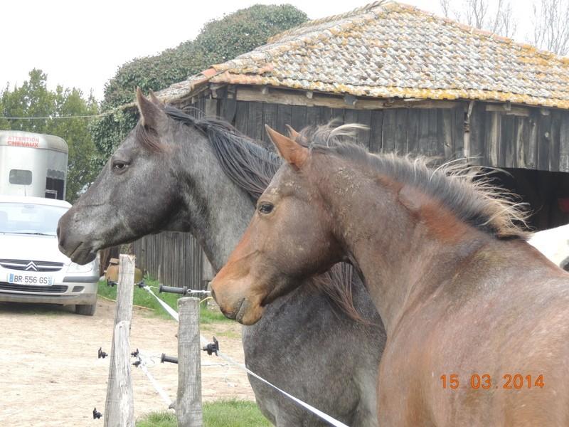 Mes chevaux, un mélange d'un peu tout le monde! - Page 8 04011