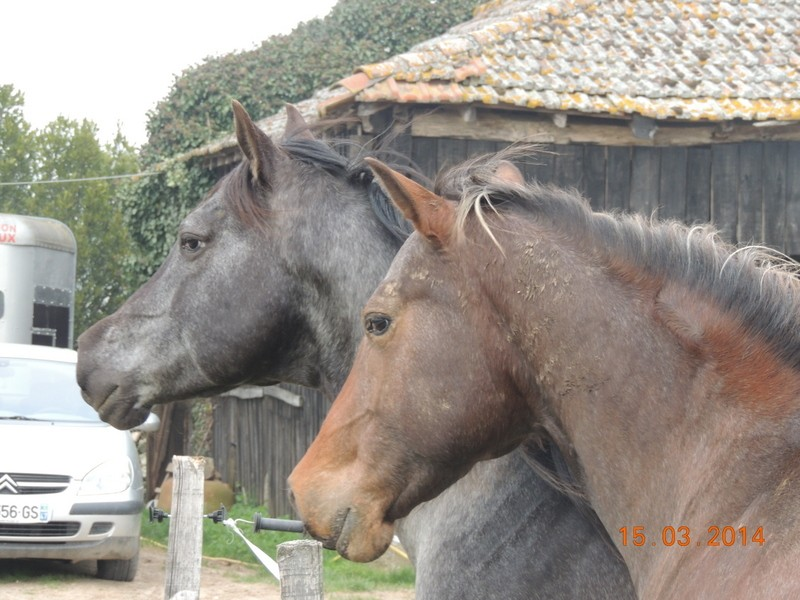 Mes chevaux, un mélange d'un peu tout le monde! - Page 8 04110