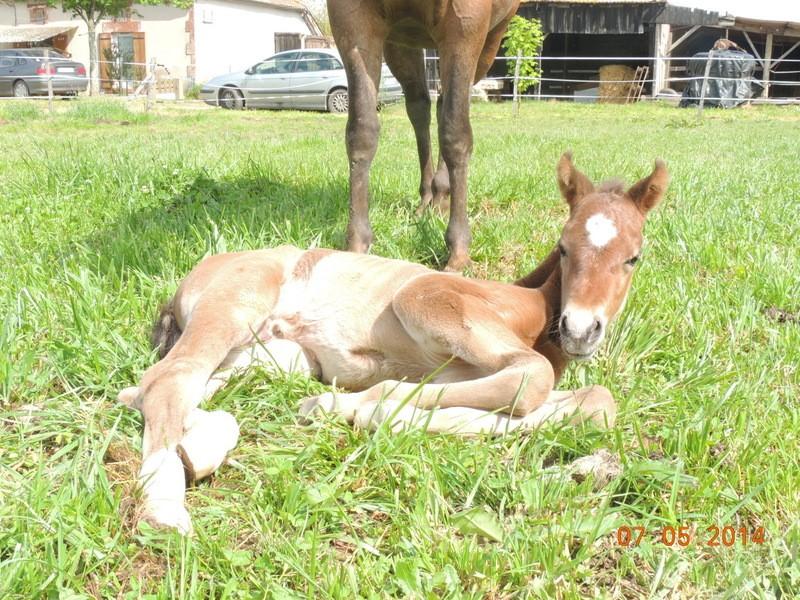 Les poulains né à l'Appaloosa IJ Farm 05010