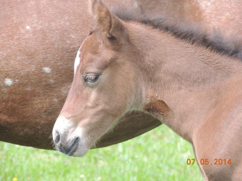 Les poulains né à l'Appaloosa IJ Farm 06210