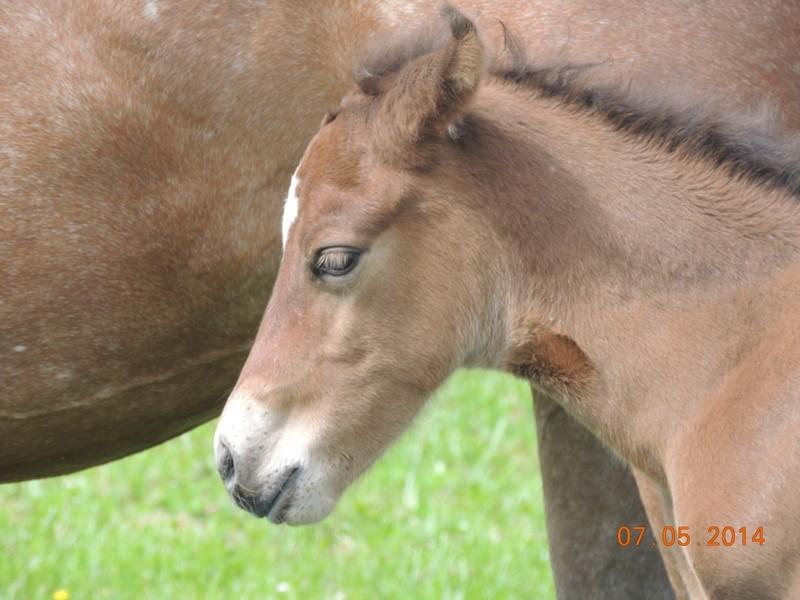 Les poulains né à l'Appaloosa IJ Farm 06310