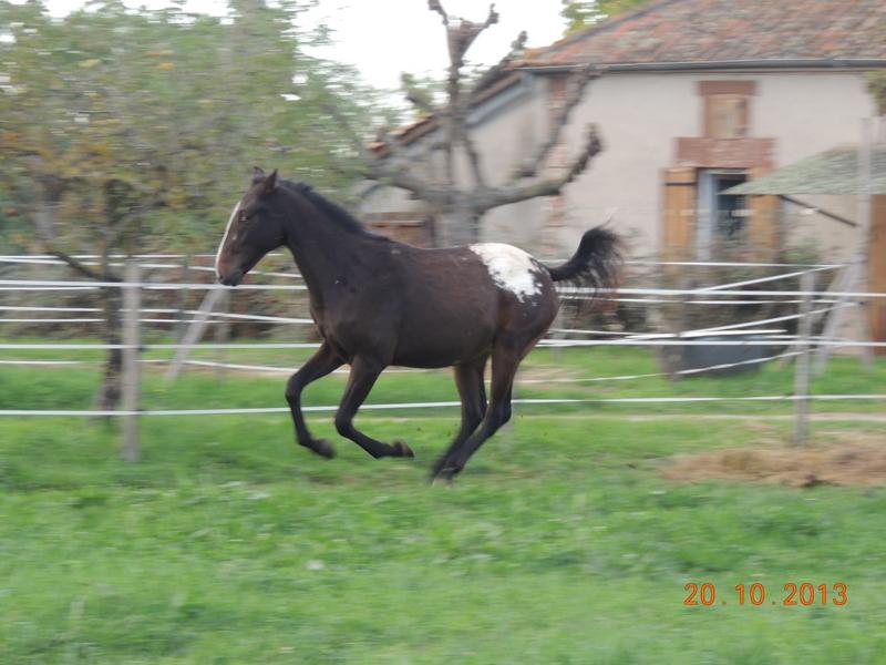 Mes chevaux, un mélange d'un peu tout le monde! - Page 8 Campbe10