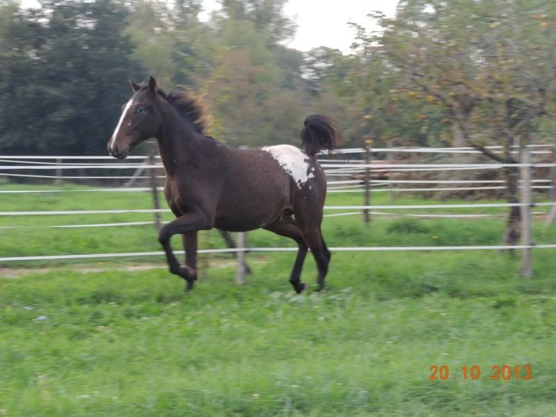 Mes chevaux, un mélange d'un peu tout le monde! - Page 8 Campbe11