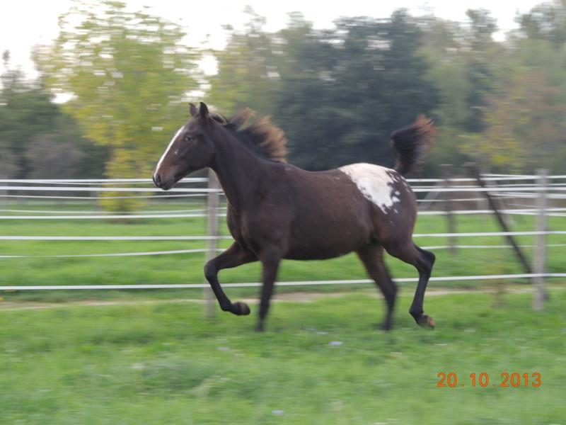 Mes chevaux, un mélange d'un peu tout le monde! - Page 8 Campbe12