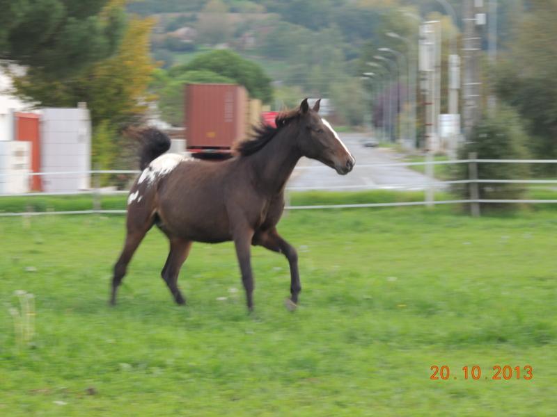 Mes chevaux, un mélange d'un peu tout le monde! - Page 8 Campbe13