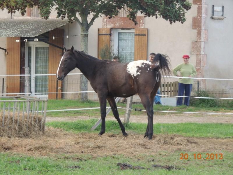 Mes chevaux, un mélange d'un peu tout le monde! - Page 8 Campbe14