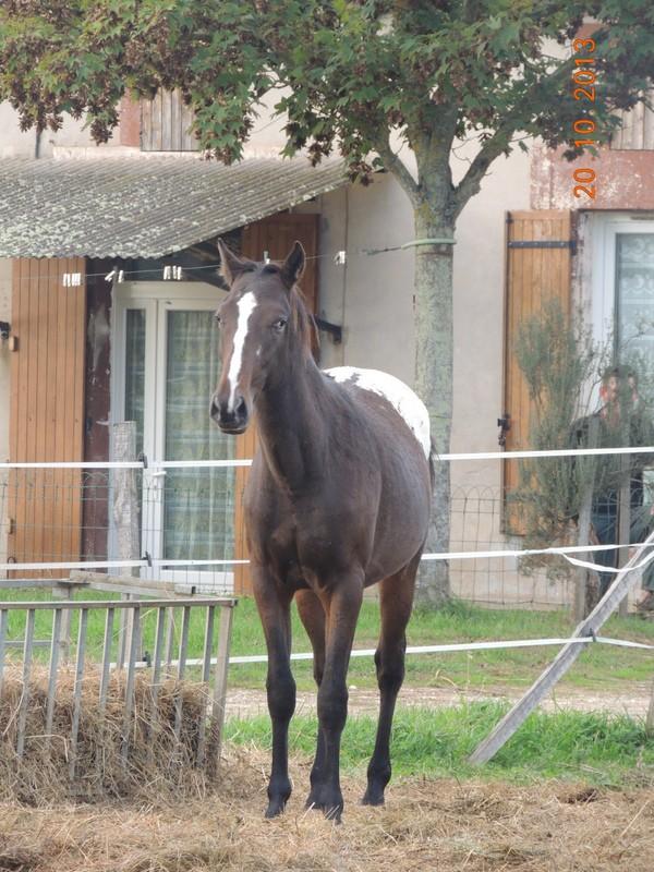 Mes chevaux, un mélange d'un peu tout le monde! - Page 8 Campbe15