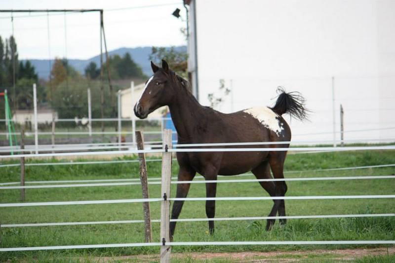 Mes chevaux, un mélange d'un peu tout le monde! - Page 8 Campbe16