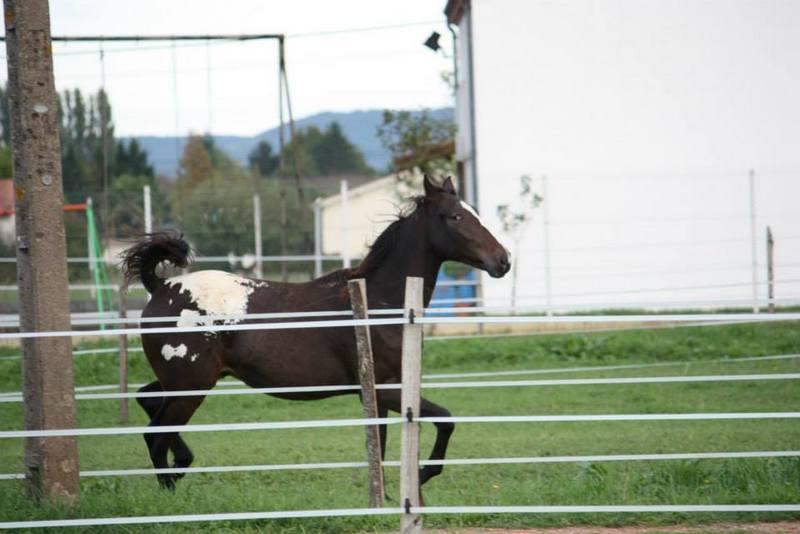 Mes chevaux, un mélange d'un peu tout le monde! - Page 8 Campbe17