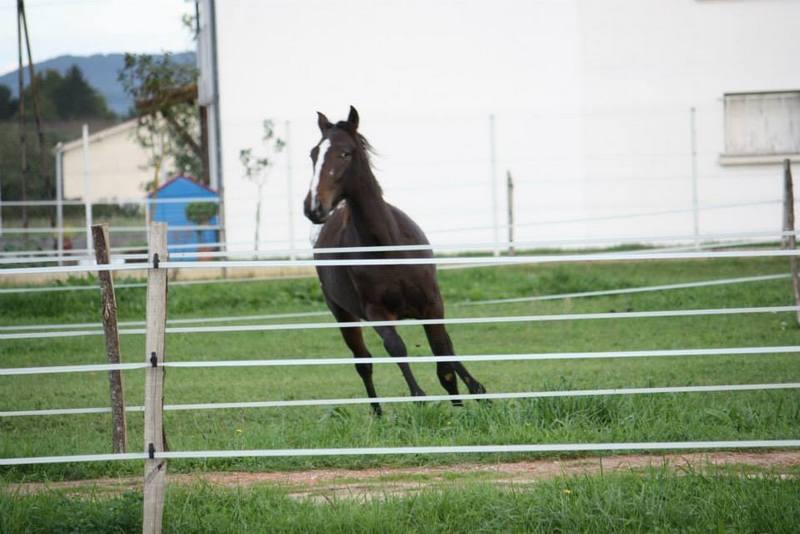 Mes chevaux, un mélange d'un peu tout le monde! - Page 8 Campbe18