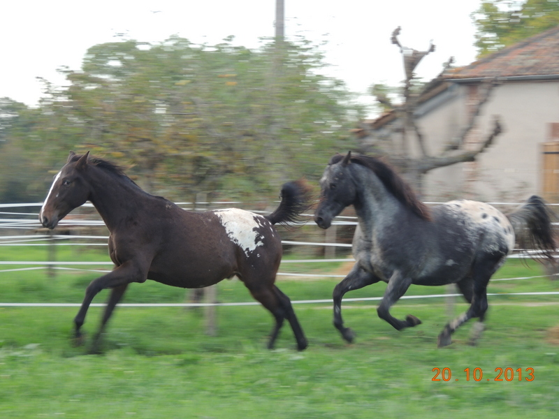 Mes chevaux, un mélange d'un peu tout le monde! - Page 8 Campbe19