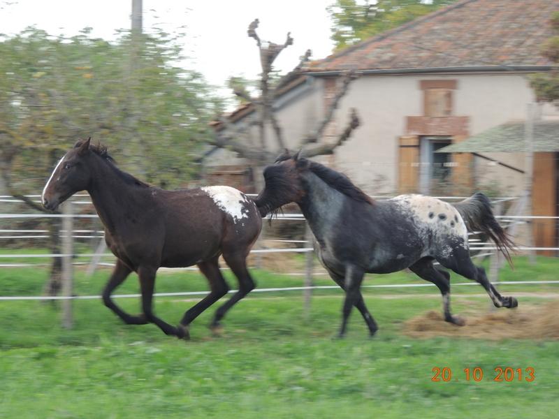 Mes chevaux, un mélange d'un peu tout le monde! - Page 8 Campbe20