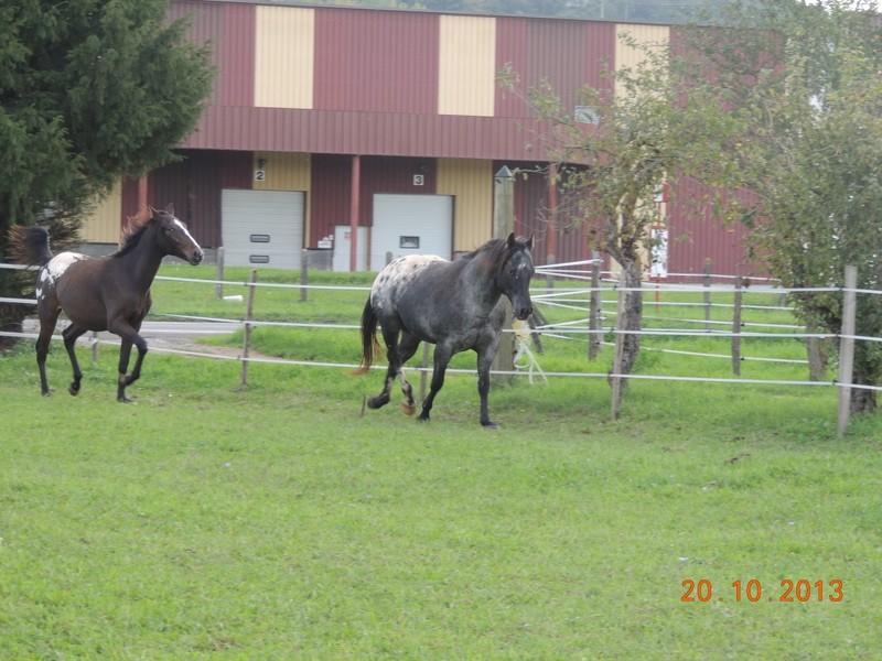 Mes chevaux, un mélange d'un peu tout le monde! - Page 8 Campbe21