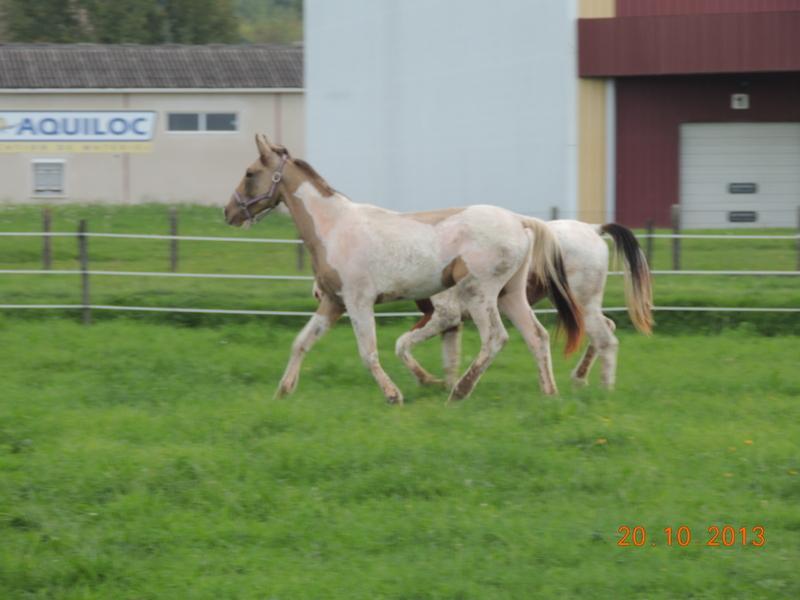 Mes chevaux, un mélange d'un peu tout le monde! - Page 8 Cassid10