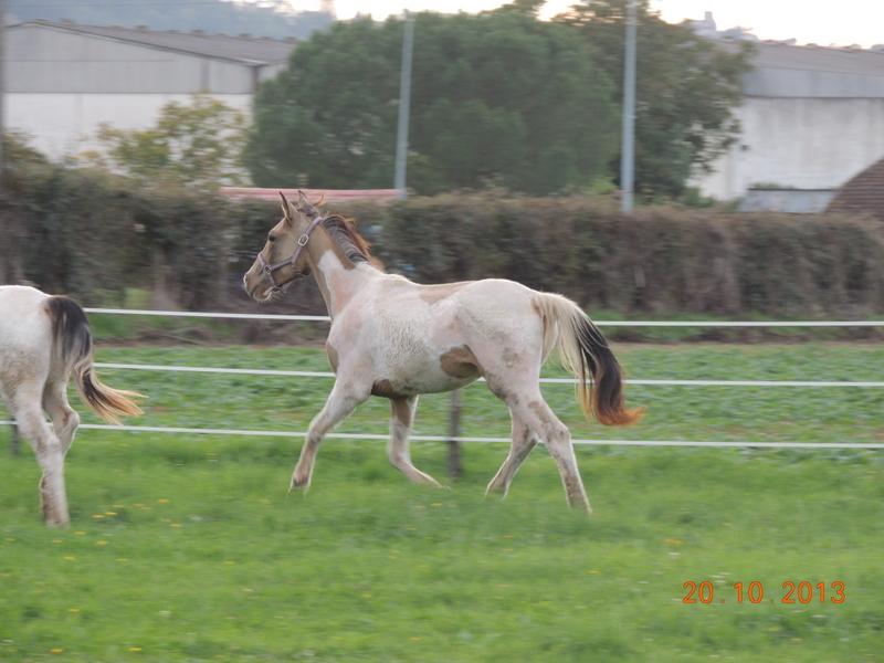 Mes chevaux, un mélange d'un peu tout le monde! - Page 8 Cassid11