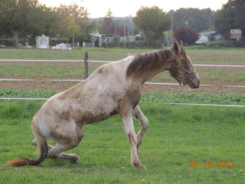Mes chevaux, un mélange d'un peu tout le monde! - Page 8 Cassid12