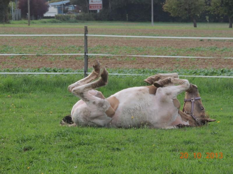 Mes chevaux, un mélange d'un peu tout le monde! - Page 8 Cassid13
