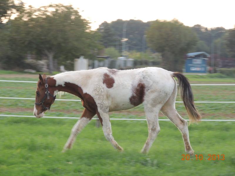 Mes chevaux, un mélange d'un peu tout le monde! - Page 8 Cochiz10