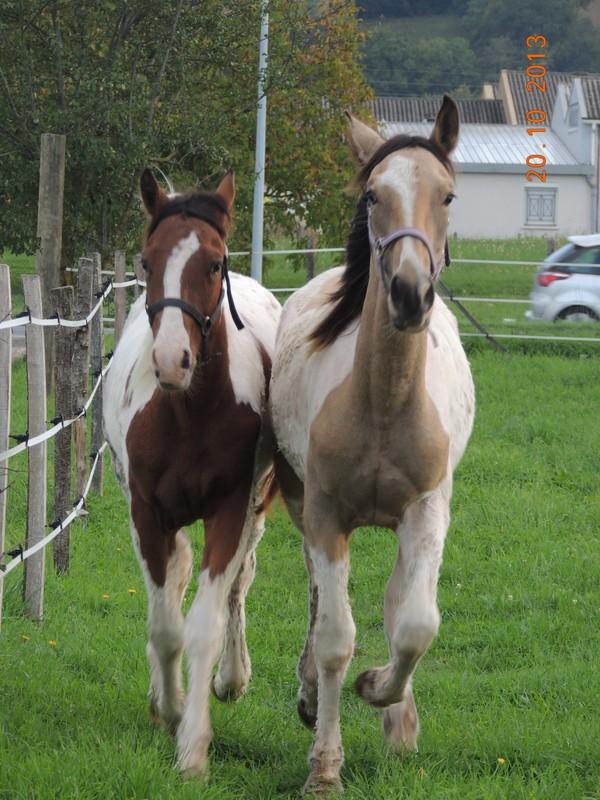 Mes chevaux, un mélange d'un peu tout le monde! - Page 8 Cochiz12