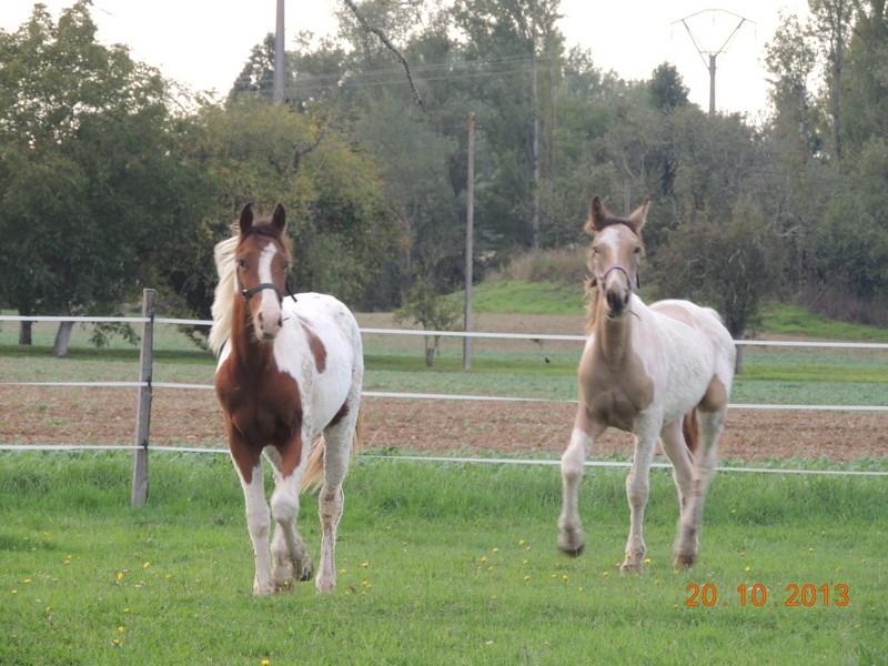 Mes chevaux, un mélange d'un peu tout le monde! - Page 8 Cochiz13