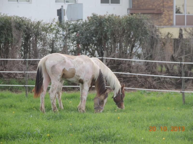 Mes chevaux, un mélange d'un peu tout le monde! - Page 8 Cochiz14