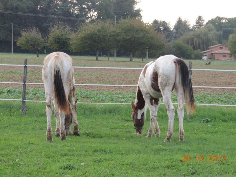 Mes chevaux, un mélange d'un peu tout le monde! - Page 8 Cochiz15