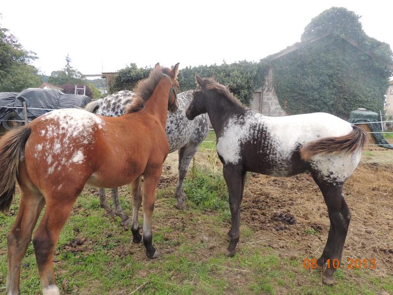 Mes chevaux, un mélange d'un peu tout le monde! - Page 8 Dodge_21