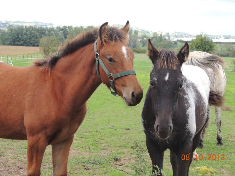 Mes chevaux, un mélange d'un peu tout le monde! - Page 8 Dodge_22
