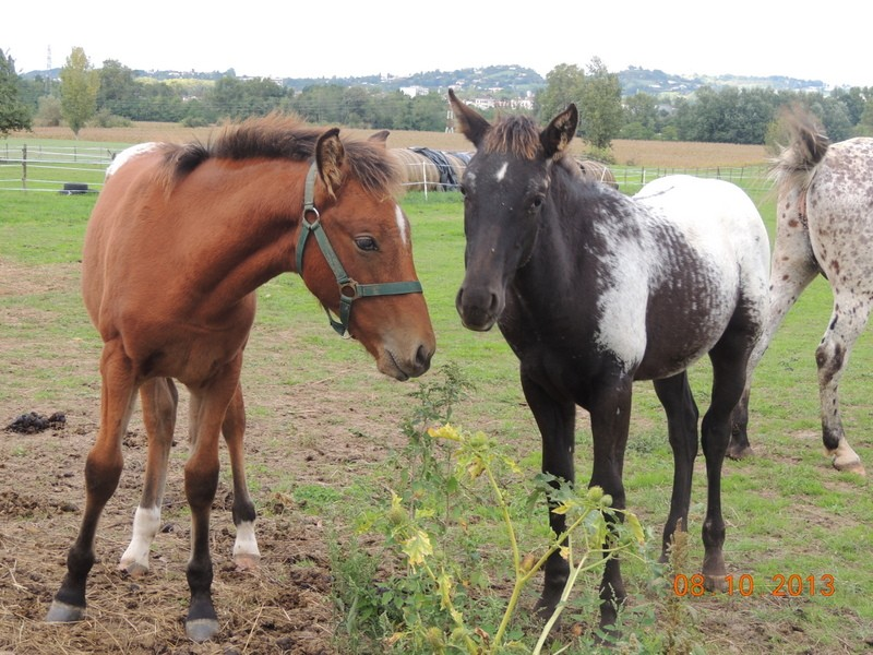 Mes chevaux, un mélange d'un peu tout le monde! - Page 8 Dodge_23