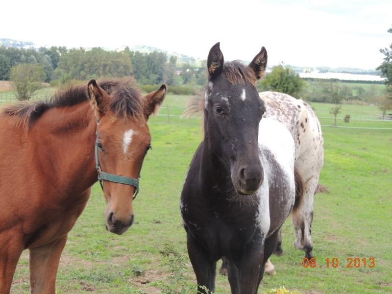 Mes chevaux, un mélange d'un peu tout le monde! - Page 8 Dodge_26