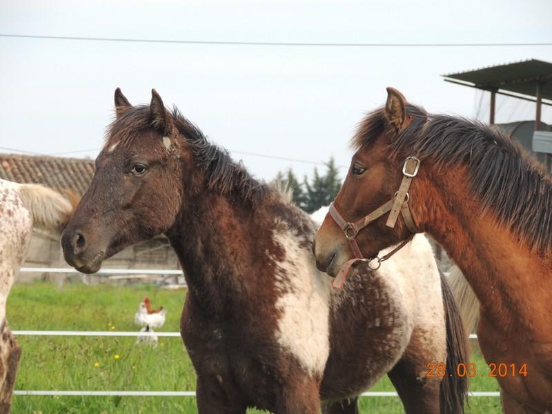 Mes chevaux, un mélange d'un peu tout le monde! - Page 8 Dodge_27