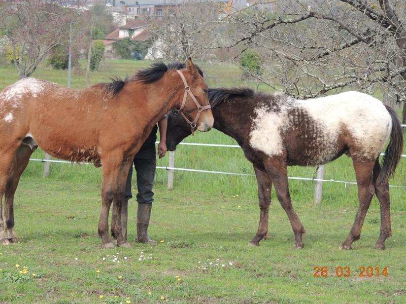Mes chevaux, un mélange d'un peu tout le monde! - Page 8 Dodge_28