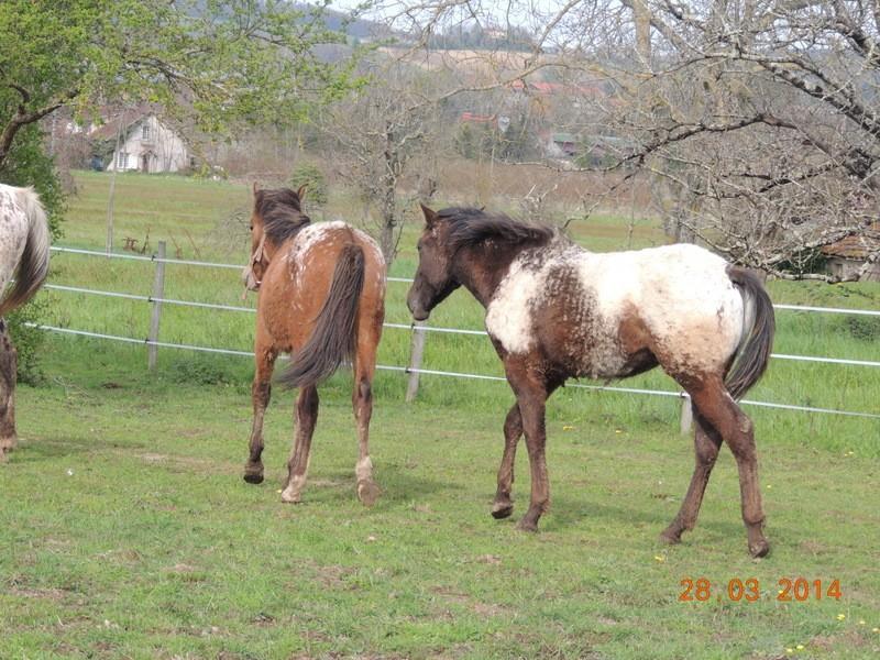 Mes chevaux, un mélange d'un peu tout le monde! - Page 8 Dodge_29