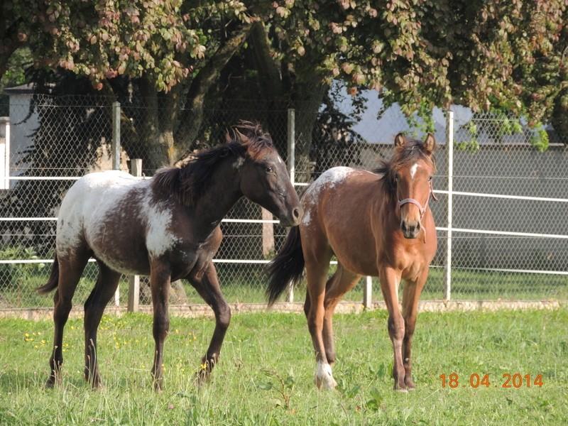 Mes chevaux, un mélange d'un peu tout le monde! - Page 8 Dodge_39