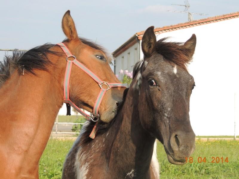 Mes chevaux, un mélange d'un peu tout le monde! - Page 8 Dodge_40