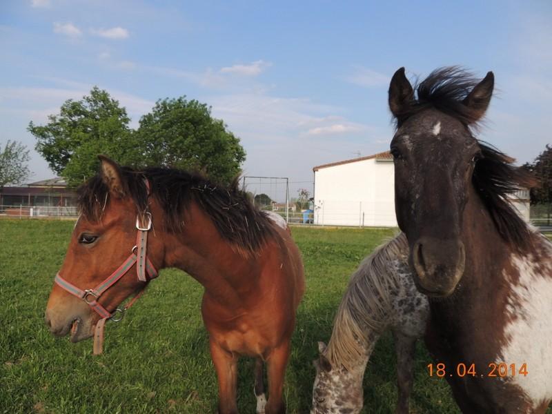 Mes chevaux, un mélange d'un peu tout le monde! - Page 8 Dodge_41