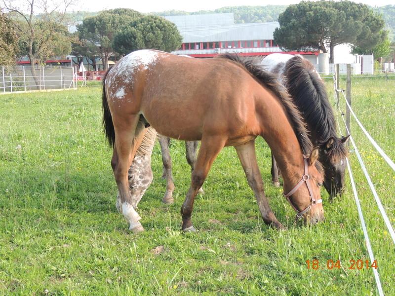 Mes chevaux, un mélange d'un peu tout le monde! - Page 8 Dodge_42