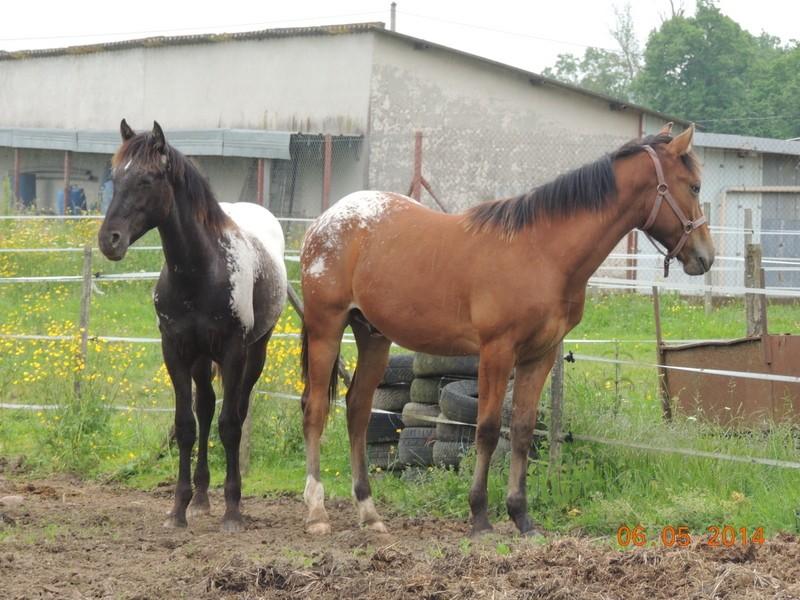 Mes chevaux, un mélange d'un peu tout le monde! - Page 9 Dodge_48