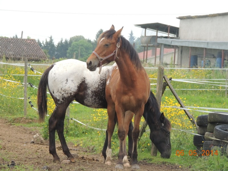 Mes chevaux, un mélange d'un peu tout le monde! - Page 9 Dodge_49