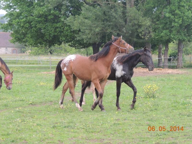 Mes chevaux, un mélange d'un peu tout le monde! - Page 9 Dodge_50